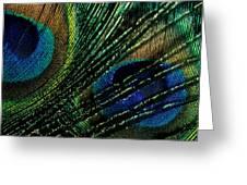 Peacock Eyes Greeting Card