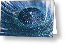 Peacock Feather Macro Waterdrops Greeting Card