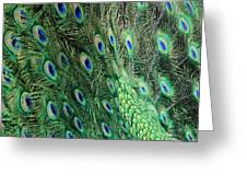 Peacock Feather Pattern Greeting Card