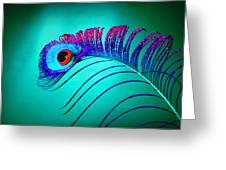 Peacock Feathers 5 Greeting Card