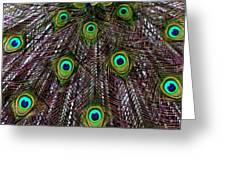 Peacock Feathers Upside Down Greeting Card