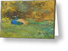 Peacock In A Garden Greeting Card