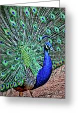 Peacock In A Oak Glen Autumn 2 Greeting Card
