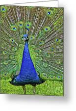 Peacock In A Oak Glen Autumn 3 Greeting Card