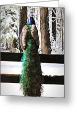 Peacock In The Snow Greeting Card