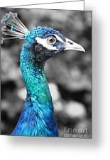 Peacock Luminance Greeting Card