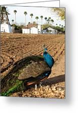 Peacock On The Farm Greeting Card
