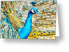 Peacock Paradise Greeting Card