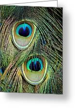 Peacock Pavo Cristatus Feather Detail Greeting Card