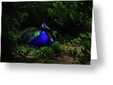 Peacock Peafowl Greeting Card