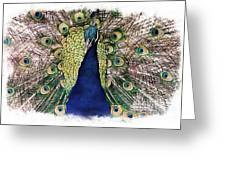 Peacock Vignette Greeting Card