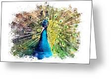 Peacock Watercolor Painting Greeting Card