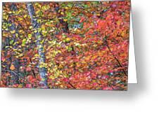 Peak Color Greeting Card