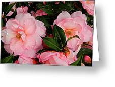 Peak Of Pink Perfection Greeting Card