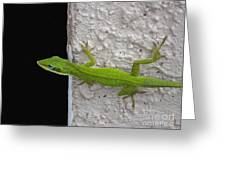 Peaking Lizard Greeting Card