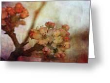 Pear Blossom Sunset 8930 Idp_2 Greeting Card