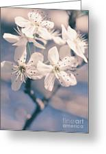 Pear Blossoms 4 Greeting Card