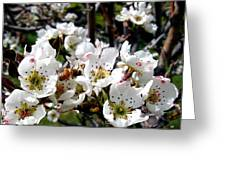 Pear Blossoms And Bee Greeting Card