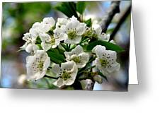 Pear Tree Blossoms 1 Greeting Card