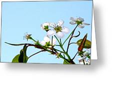 Pear Tree Blossoms 4 Greeting Card