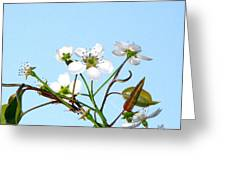 Pear Tree Blossoms 6 Greeting Card
