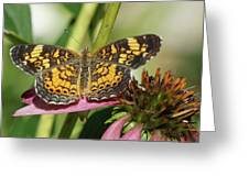 Pearl Crescent Butterfly On Coneflower Greeting Card