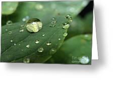 Pearls On Leaf 5 Greeting Card