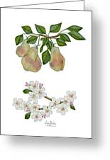 Pears And Pear Blossoms Greeting Card