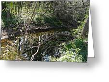Pearson Creek 2 Greeting Card