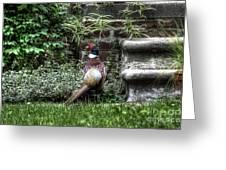 Peasant Pheasant Greeting Card