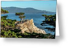 Pebble Beach Iconic Tree With Sun Light At Dusk Greeting Card