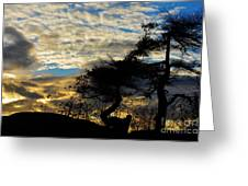 Pebbles Beach Pine Tree Greeting Card