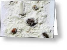 Pebbles In Snow Greeting Card by Augusta Stylianou