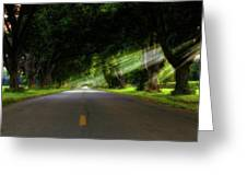 Pecan Alley Rays - Arkansas - Landscape Greeting Card