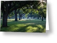 Pecan Grove Sunrise Greeting Card