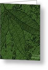 Pecan Tree Leaves Greeting Card