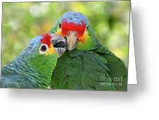 Pecking Order Greeting Card