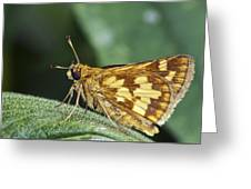 Peck's Skipper Greeting Card