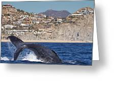 Pedregal - Cabo San Lucas Greeting Card