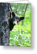 Peek-a-boo Greeting Card by Gerry Sibell