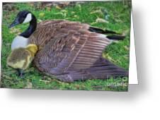 Peek-a-boo Goslings Greeting Card