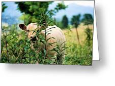 Peek A Boo Greeting Card by Jan Amiss Photography