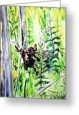 Peek A Boo Moose Greeting Card