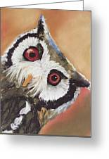 Peekaboo Owl Greeting Card