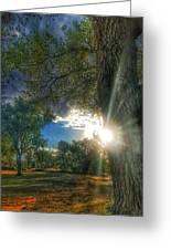 Peekaboo Tree Greeting Card
