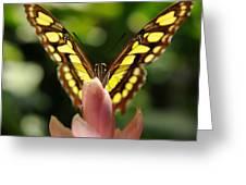 peeking Butterfly Greeting Card