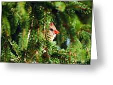 Peeking From The Pines Greeting Card