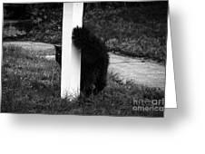Peeking Kitty Black And White Greeting Card