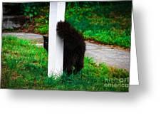 Peeking Kitty Greeting Card