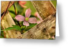 Peeking Throuigh Greeting Card